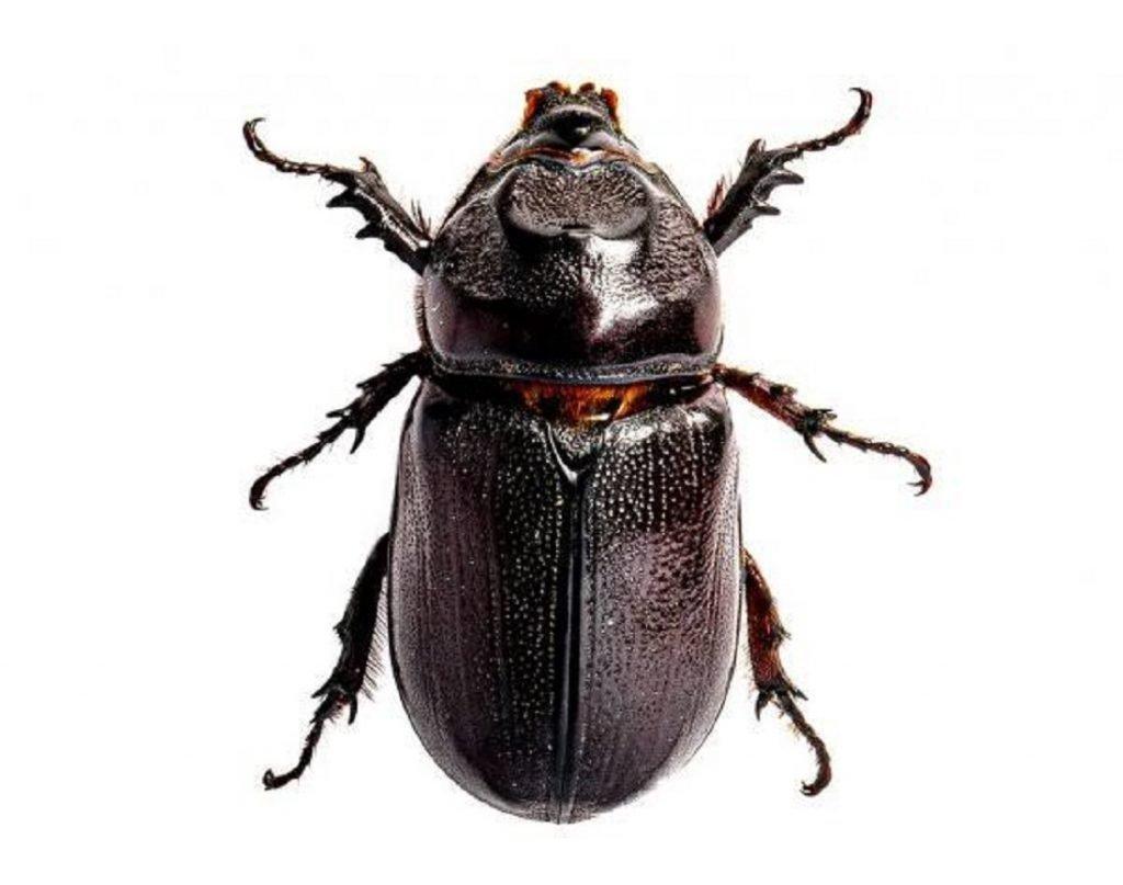 Ilustrasi serangga yang bisa digunakan untuk I-BOT, gagasan Tim Spektronics ITS