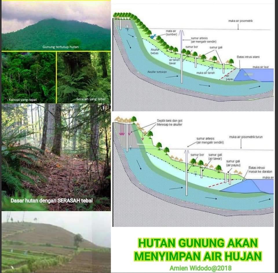 Ilustrasi hutan gunung sebagai kawasan hutan lindung dan daerah resapan air