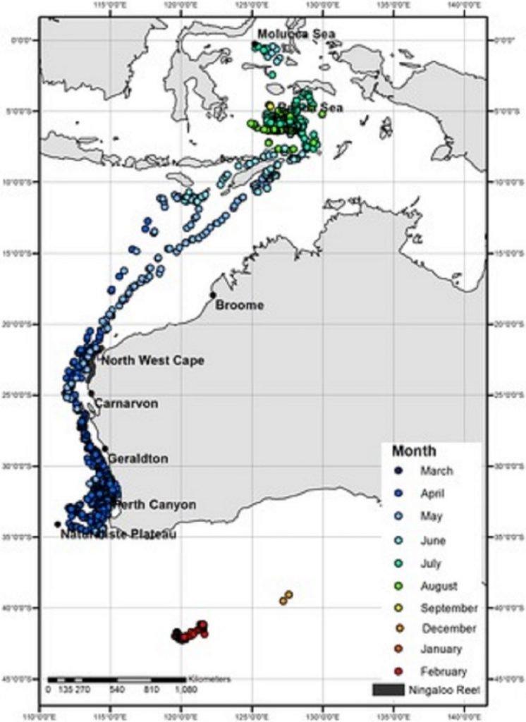 Peta pergerakan migrasi paus tiap bulannya. (Dok.journals.plos.org)