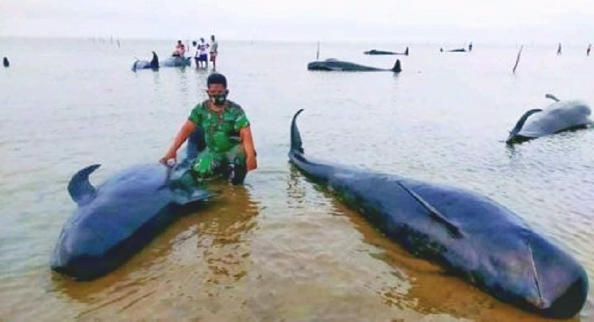 Dokumentasi paus yang terdampar di Pantai Modung, Kecamatan Blega, Kabupaten Bangkalan, Madura (tangkapan layar medsos @syahrirdaenk)